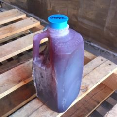 Cold Pressed Grape Juice – 1/2 gal