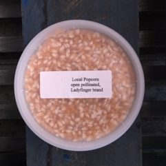 Heirloom Popcorn Kernels –  per lb