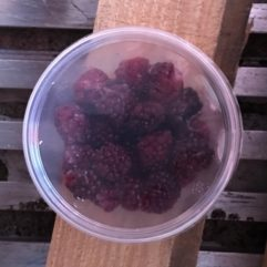 Blackberries – frozen – PINT