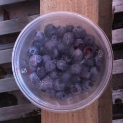 Blueberries – frozen – QUART