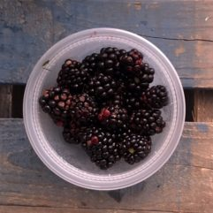 Blackberries – fresh – PINT