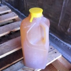 Raw Pear Cider