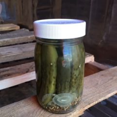 On Sale – Whole Dill Pickles – PINT