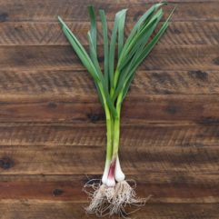 Fresh Spring Garlic – per bunch